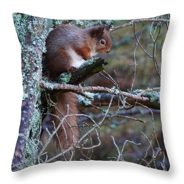 Throw Pillow featuring the photograph Red Squirrel On Pine Tree by Phil Banks