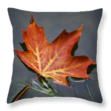 Red Sugar Maple Leaf Throw Pillow by Christina Rollo