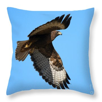 Red-tail Flight Throw Pillow by Mike Dawson