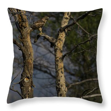 Red-tail Hawk   #0596 Throw Pillow by J L Woody Wooden