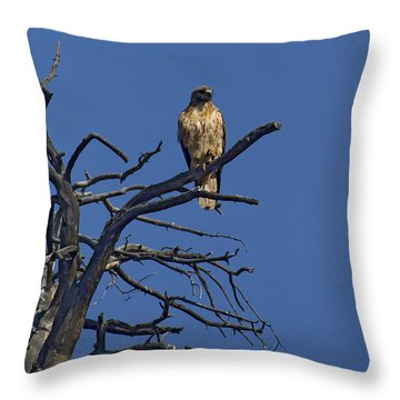 Red-tail Hawk   #0622 Throw Pillow by J L Woody Wooden