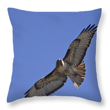Red-tail Hawk  #1853 Throw Pillow by J L Woody Wooden