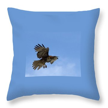 Red Tail Hawk Throw Pillow by Bill Gallagher