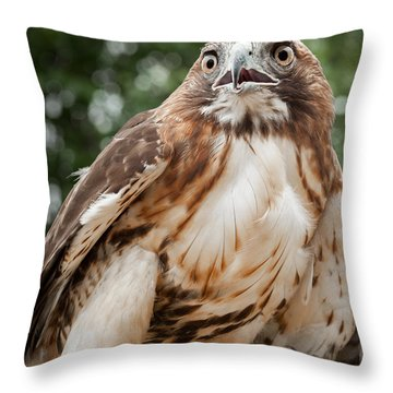 Red Tail Hawk Throw Pillow by Bill Wakeley