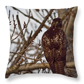 Red Tail Hawk Throw Pillow by Brian Williamson