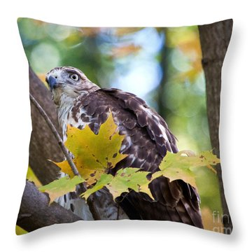 Throw Pillow featuring the photograph Red Tail Hawk Closeup by Eleanor Abramson