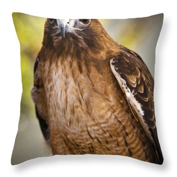 Eyes Of The Raptor Throw Pillow