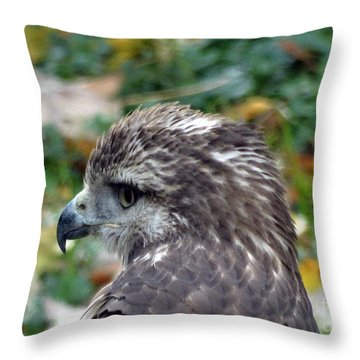 Red Tail Hawk Head Shot Throw Pillow