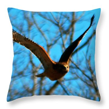 Throw Pillow featuring the photograph Red Tail Hawk In Flight by Peggy Franz