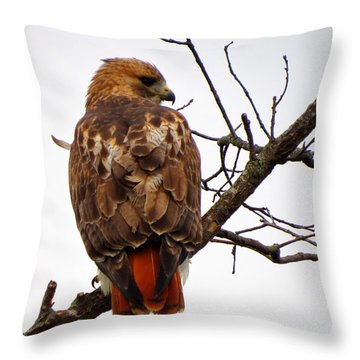 Red Tail Hawk In Winter Throw Pillow by Dianne Cowen