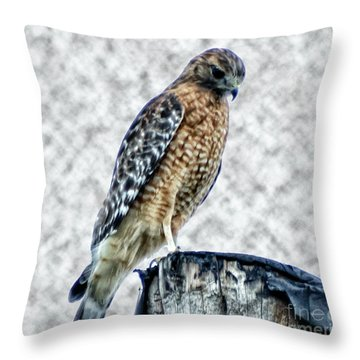 Red Tail Hawk Looking Down Throw Pillow