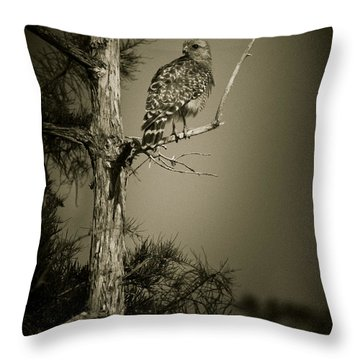 Red Tail Hawk On Loop Road Throw Pillow