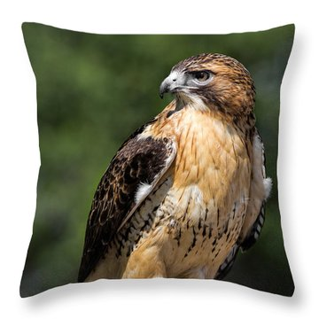 Red Tail Hawk Portrait Throw Pillow by Dale Kincaid