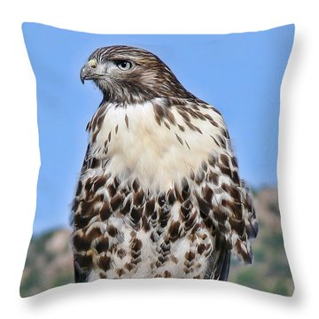 Red Tail Hawk Youth Throw Pillow by Jennie Marie Schell