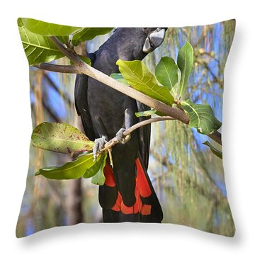 Red-tailed Black-cockatoo Queensland Throw Pillow