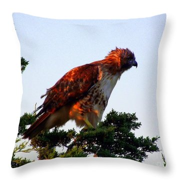Red-tailed Hawk Fluff Up Throw Pillow by CapeScapes Fine Art Photography