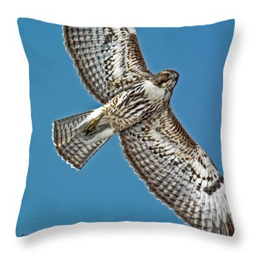 Red-tailed Hawk Fly-over Throw Pillow