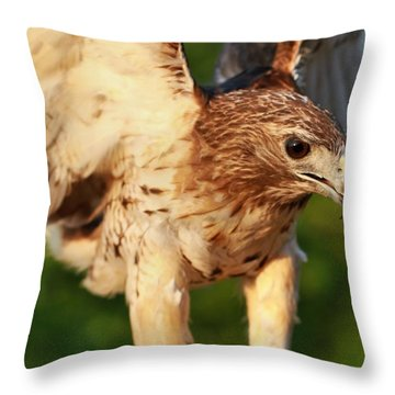 Red Tailed Hawk Hunting Throw Pillow by Dan Sproul