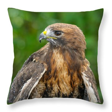 Red-tailed Hawk Close-up Throw Pillow