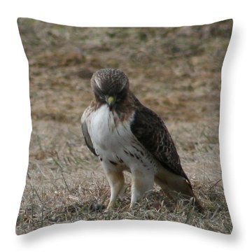 Red Tailed Hawk Throw Pillow by Neal Eslinger