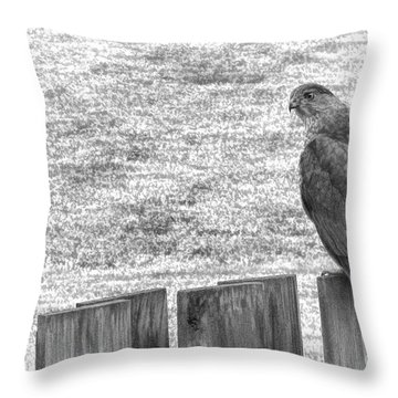Red Tailed Hawk  Throw Pillow by Olivier Le Queinec