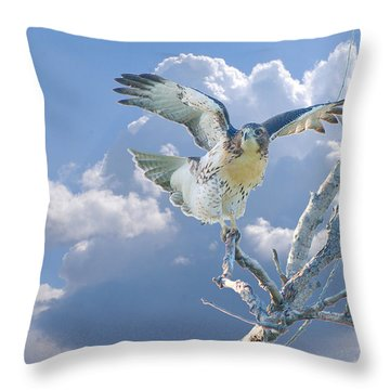 Red-tailed Hawk Pirouette Pose Throw Pillow by Roy Williams