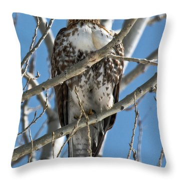 Red-tailed Hawk Stare Down Throw Pillow