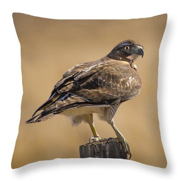 Red Tailed Hawk Watching Throw Pillow