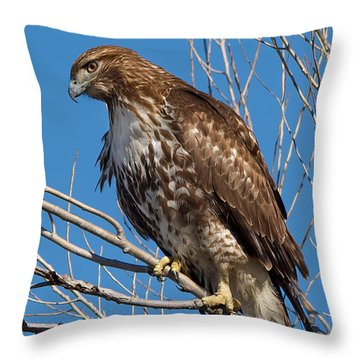 Red-tailed Hawk Watching The Ducks Throw Pillow