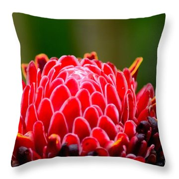 Red Torch Ginger Flower Head From Tropics Singapore Throw Pillow by Imran Ahmed