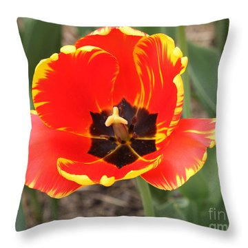 Red Tulip At Brooklyn Botanical Gardens Throw Pillow by John Telfer
