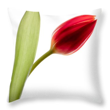 Red Tulip Throw Pillow by Dave Bowman
