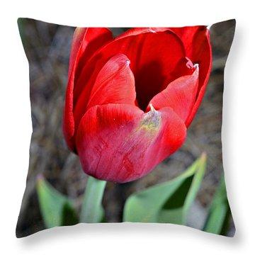 Red Tulip In Garden Throw Pillow by Susan Leggett