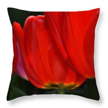 Red Tulips In Sunlight Throw Pillow by Diane Lent