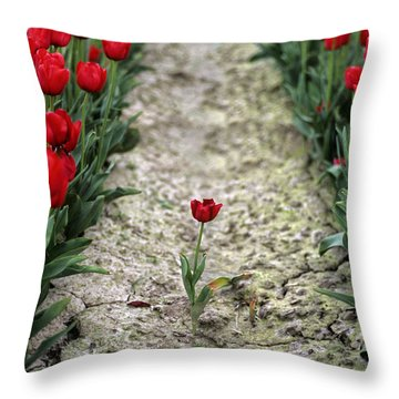Red Tulips Throw Pillow by Jim Corwin