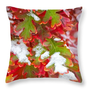 Throw Pillow featuring the photograph Red White And Green by Ronda Kimbrow