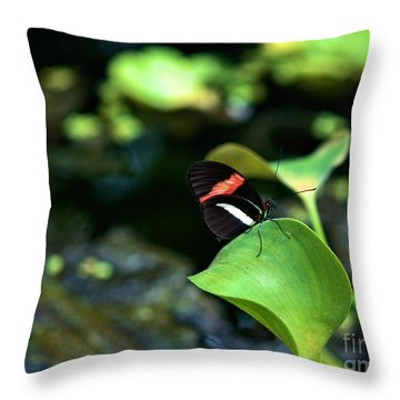 Red White Black Butterfly Throw Pillow