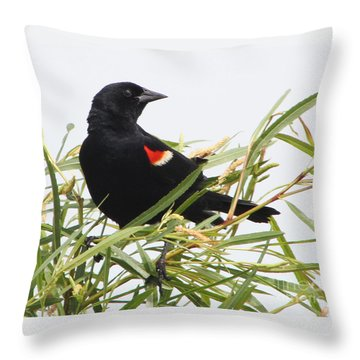 Throw Pillow featuring the photograph Red-winged Beauty by Anita Oakley