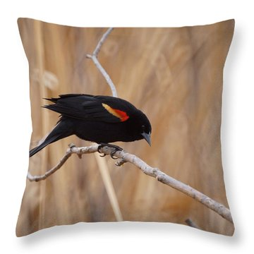 Red Winged Blackbird 1 Throw Pillow by Ernie Echols