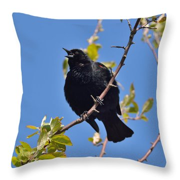 Red Winged Blackbird Throw Pillow by Kathy King