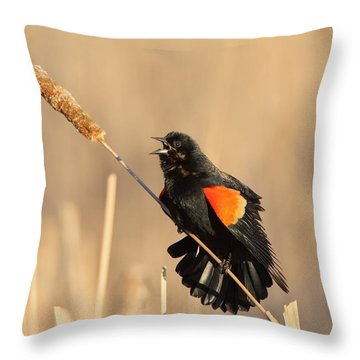 Red Winged Blackbird On Cattail Throw Pillow by Daniel Behm