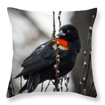 Red Winged Blackbird In Pussy Willows Throw Pillow by Patti Deters