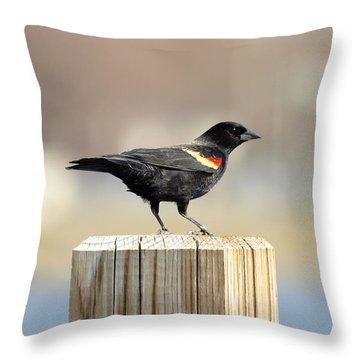 Red Winged Blackbird Throw Pillow