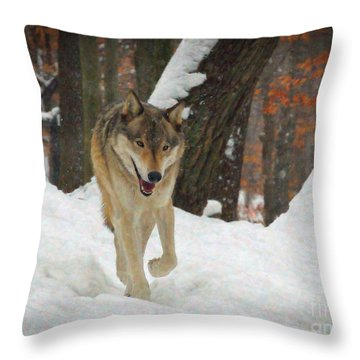 Throw Pillow featuring the digital art Red Wolf On A Winter Hunt by Lianne Schneider