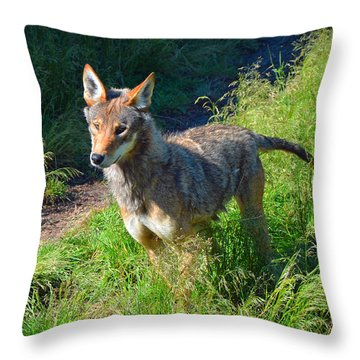 Red Wolf Pup Throw Pillow
