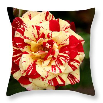 Red Yellow Rose Throw Pillow by Christine Till