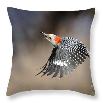 Redbelly Woodpecker Flight Throw Pillow by Nava Thompson