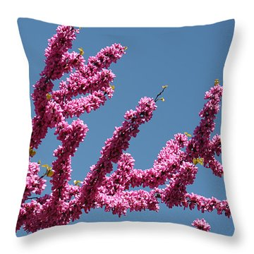 Throw Pillow featuring the photograph Redbud Against Blue Sky by William Selander
