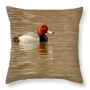Redhead Duck Throw Pillow