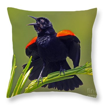 Redwing Black Bird At Full Song Throw Pillow by Larry Nieland